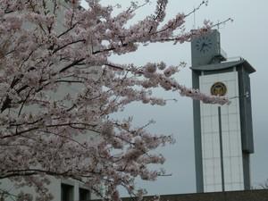 桜と時計台.jpg